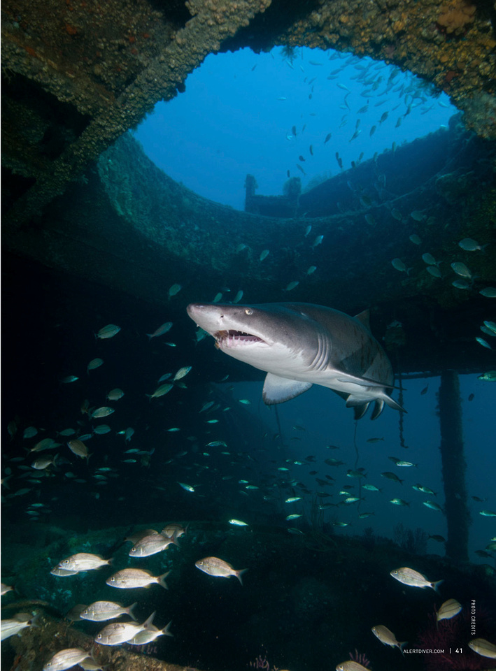 Alert Diver Magazine - Wreck Diving With Sand Tigers Page 2