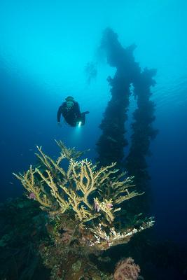 Sankisan Maru Hard Coral Delight