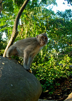 Ubud Monkey Forest III